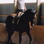 Viola, Dutch Warmblood dressage schoolmaster