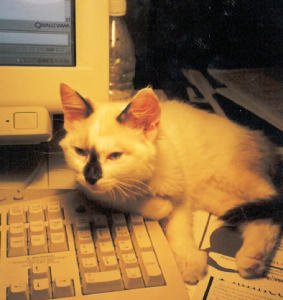 Monet as a kitten; his colouring got darker as he got older.